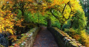 Stone bridge under canopy of autumn leaves